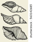 Set Of Vector Vintage Seashell...