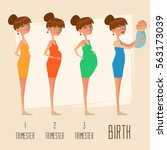 stages of pregnancy  changing... | Shutterstock .eps vector #563173039
