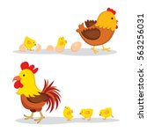 chicken and chicks | Shutterstock .eps vector #563256031