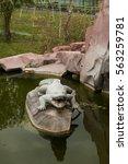 stone alligator in pond | Shutterstock . vector #563259781