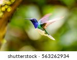 humming bird flies | Shutterstock . vector #563262934