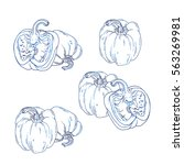 ink hand drawn peppers on white ... | Shutterstock . vector #563269981