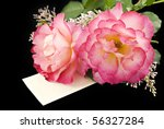 Two Beautiful Pink Roses With ...