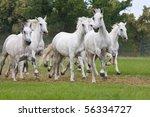 Herd Horses Running On Meadow