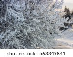 branches and bushes covered... | Shutterstock . vector #563349841