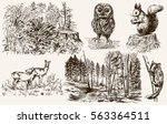 forest nook. wild animals. hand ...   Shutterstock .eps vector #563364511