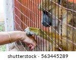 baboon holding women's hand | Shutterstock . vector #563445289