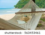 hammock on the beach  white...   Shutterstock . vector #563453461