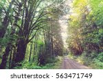 fabulous rain forest in olympic ... | Shutterstock . vector #563471749
