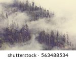 Magic Misty Forest In The...
