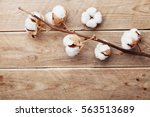 beautiful white cotton flowers... | Shutterstock . vector #563513689