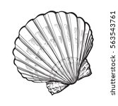 scallop sea shell  sketch style ... | Shutterstock .eps vector #563543761