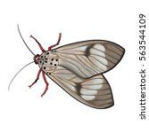 top view of gray moth  sketch... | Shutterstock .eps vector #563544109