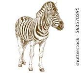 vector antique engraving... | Shutterstock .eps vector #563570395