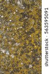 Small photo of Green Moss (Plantae Bryophyta) on a rock - vertical