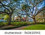 trees at forsyth park  in... | Shutterstock . vector #563610541