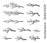Collection Of Tree Branches An...