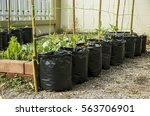 organic farming vegetable...