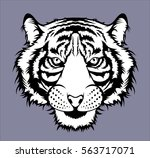 tiger head | Shutterstock .eps vector #563717071