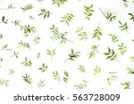 green branches and leaves on... | Shutterstock . vector #563728009