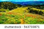 hiking through alpine meadows... | Shutterstock . vector #563733871