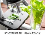concept healthy food inspection ... | Shutterstock . vector #563759149