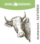 sketch of cow drawn by hand.... | Shutterstock .eps vector #563769835