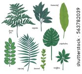 exotic leaves color set | Shutterstock .eps vector #563782039