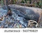 Close Up  Campfire Ashes