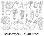 vegetables vector sketch... | Shutterstock .eps vector #563803924