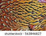 pheasant feather | Shutterstock . vector #563846827