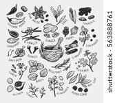 set of hand drawn vector spices ... | Shutterstock .eps vector #563888761