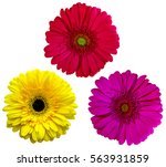 Gerbera Flowers  Isolated On...