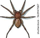 spider   vector illustration | Shutterstock .eps vector #563947087