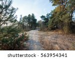 frozen ground on hiking trail ... | Shutterstock . vector #563954341