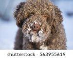 Snowy Dog's Face. The Dog Had...