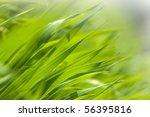 fresh green grass in the... | Shutterstock . vector #56395816