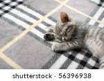 Stock photo sleeping kitten 56396938