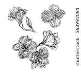 hand drawn sketch illustration... | Shutterstock .eps vector #563992081