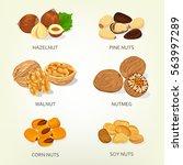 nut food ingredients. hazelnut... | Shutterstock .eps vector #563997289
