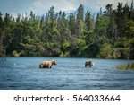 Alaskan brown bear sow and cub in the Brooks River in Katmai National Park, Alaska