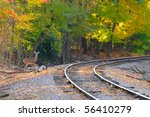 An alert deer stands by an old railroad track - stock photo