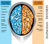 Human Brain Left And Right...