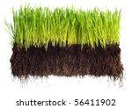 green grass showing roots | Shutterstock . vector #56411902