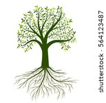 vector tree with leaves and... | Shutterstock .eps vector #564123487