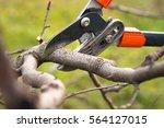 gardener pruning fruit trees... | Shutterstock . vector #564127015