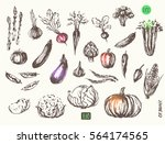 hand drawn vegetable sketch... | Shutterstock .eps vector #564174565