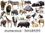 set of different african... | Shutterstock . vector #564189295