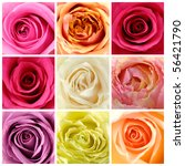 Beautiful Collage Of Soft Roses