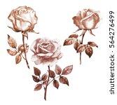 watercolor illustration of...   Shutterstock . vector #564276499